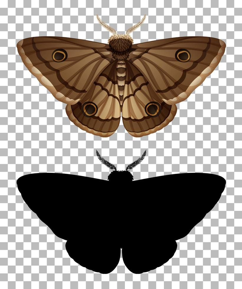 mariposa e sua silhueta isolada vetor
