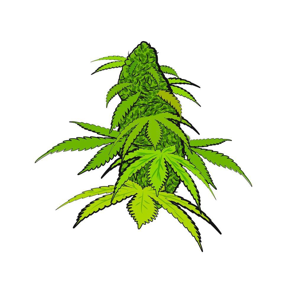 flor de cannabis verde brilhante em estilo desenhado à mão vetor