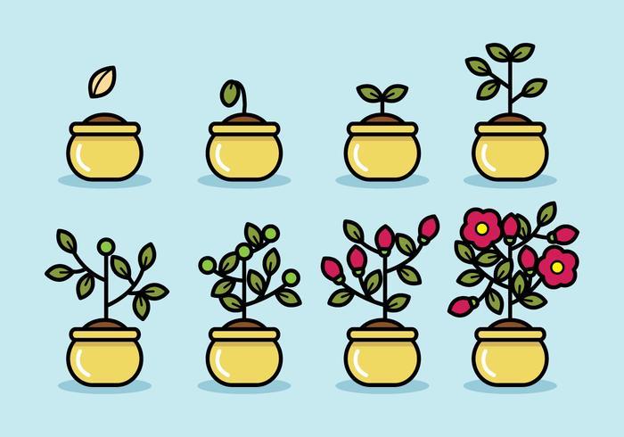 Vetor da planta ciclo de vida