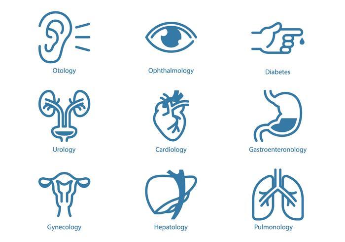 Urologia e Ícone de Órgão Interno vetor
