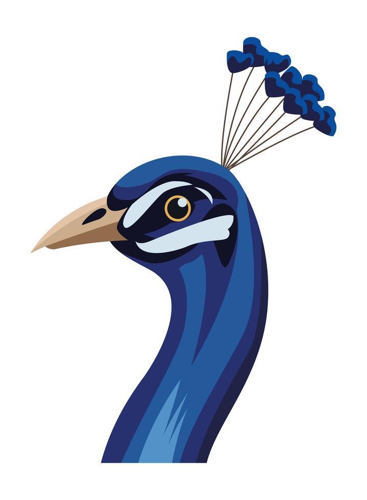 cabeça de pássaro pavão vetor