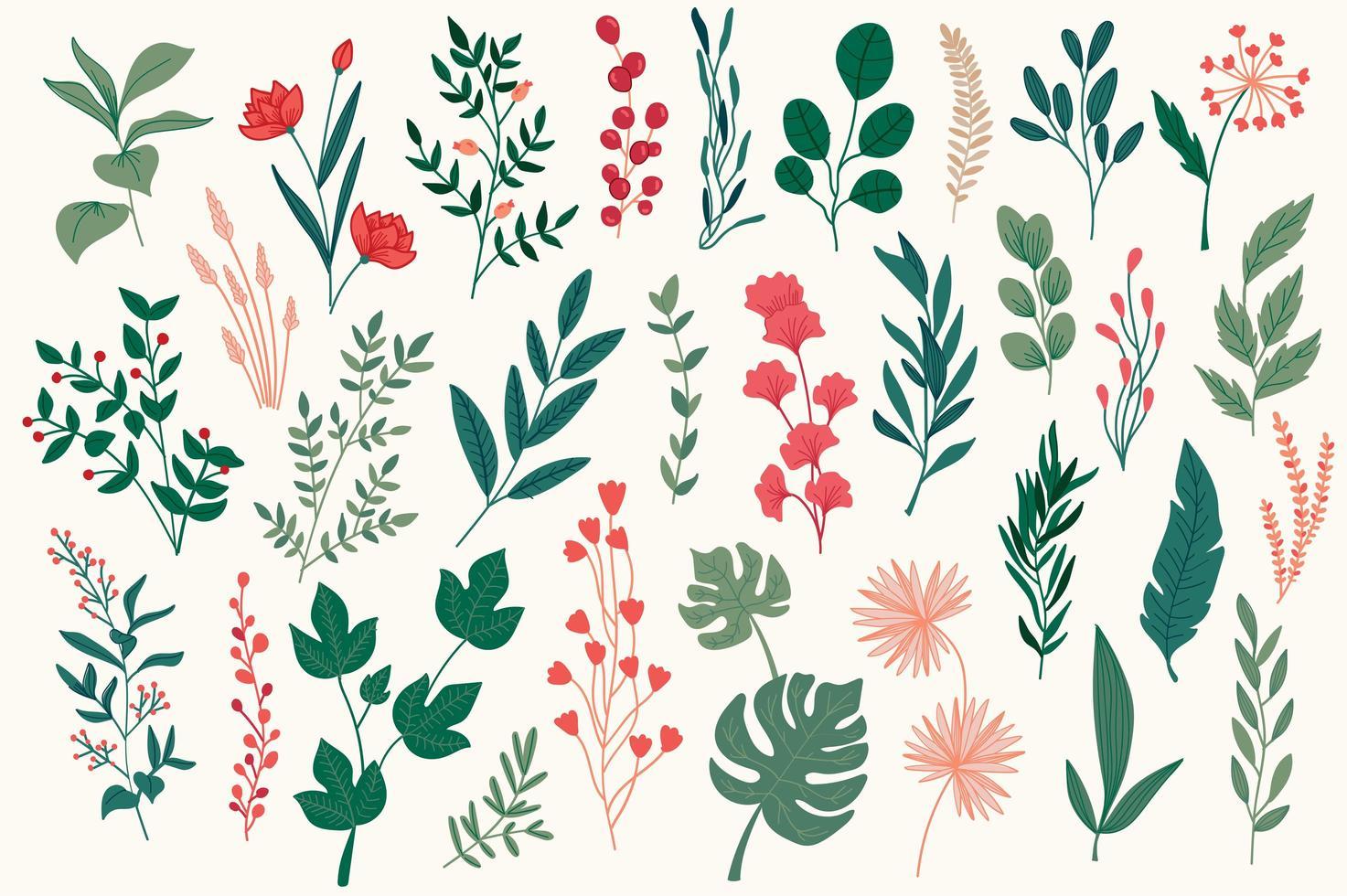 elementos botânicos, pacote gráfico desenhado à mão. vetor