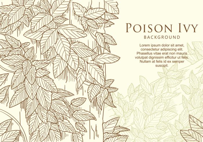 Folha de Ivy Poison Hand Drawn grátis vetor