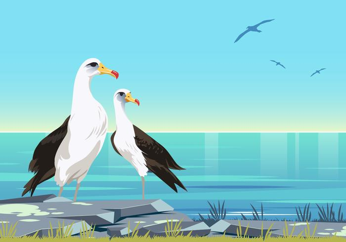 Casal de vetor de aves de albatroz