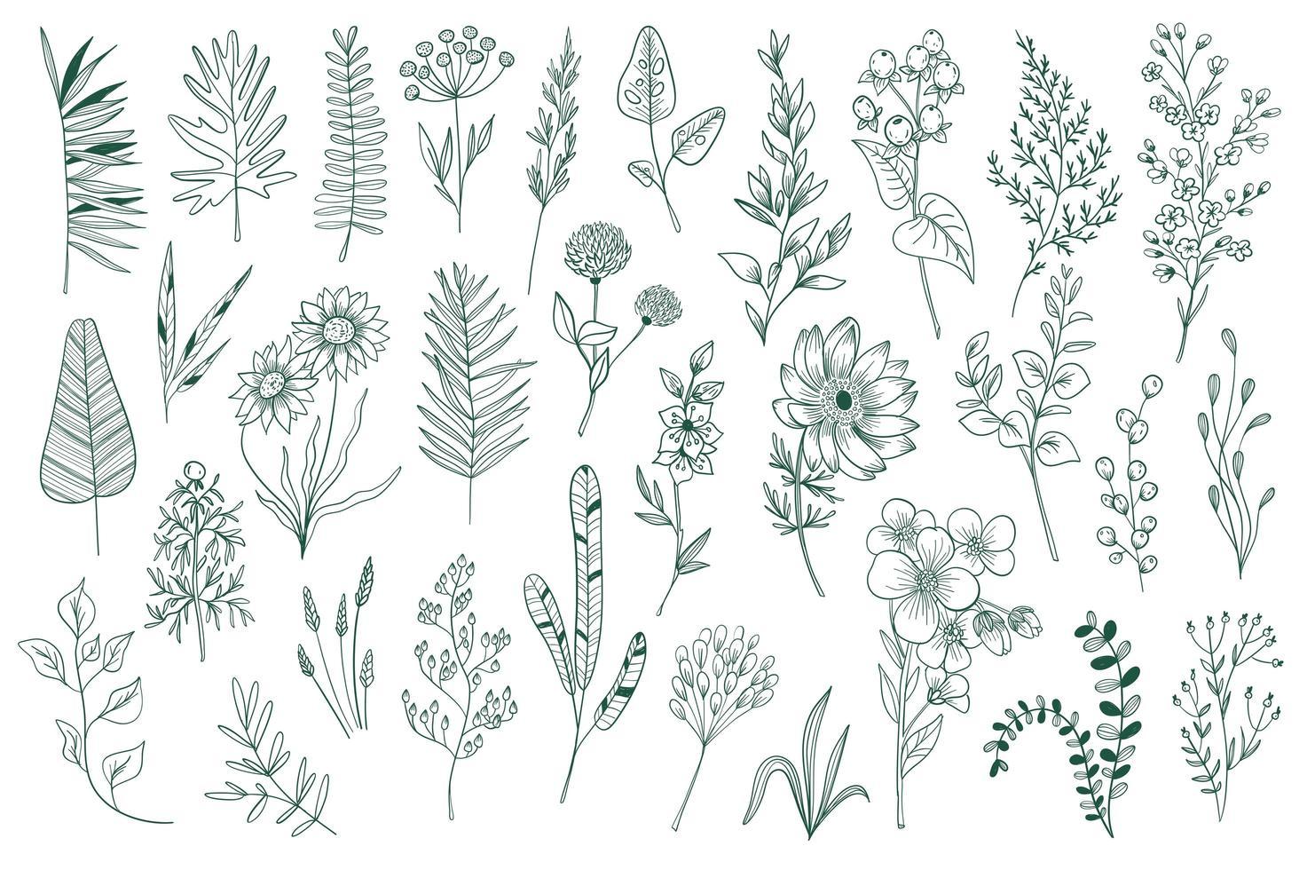 conjunto de elementos de contorno decorativo de flores silvestres vetor