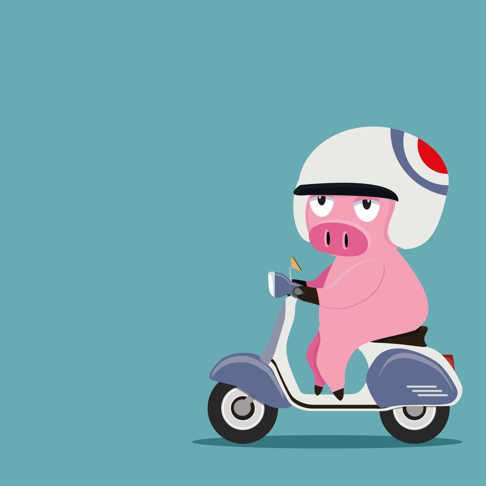 Porco fofo usando um capacete e andando de moto vetor