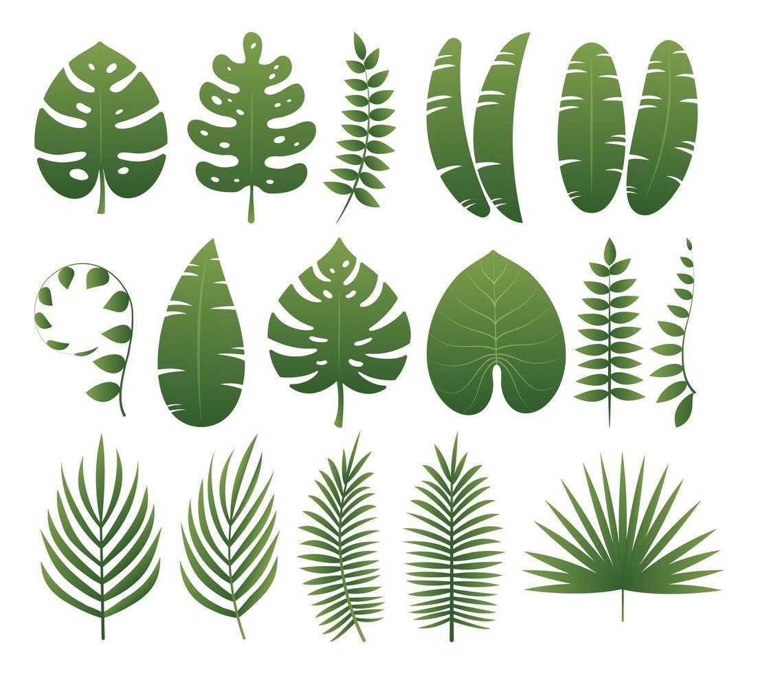 coleção de folhas tropicais vetor