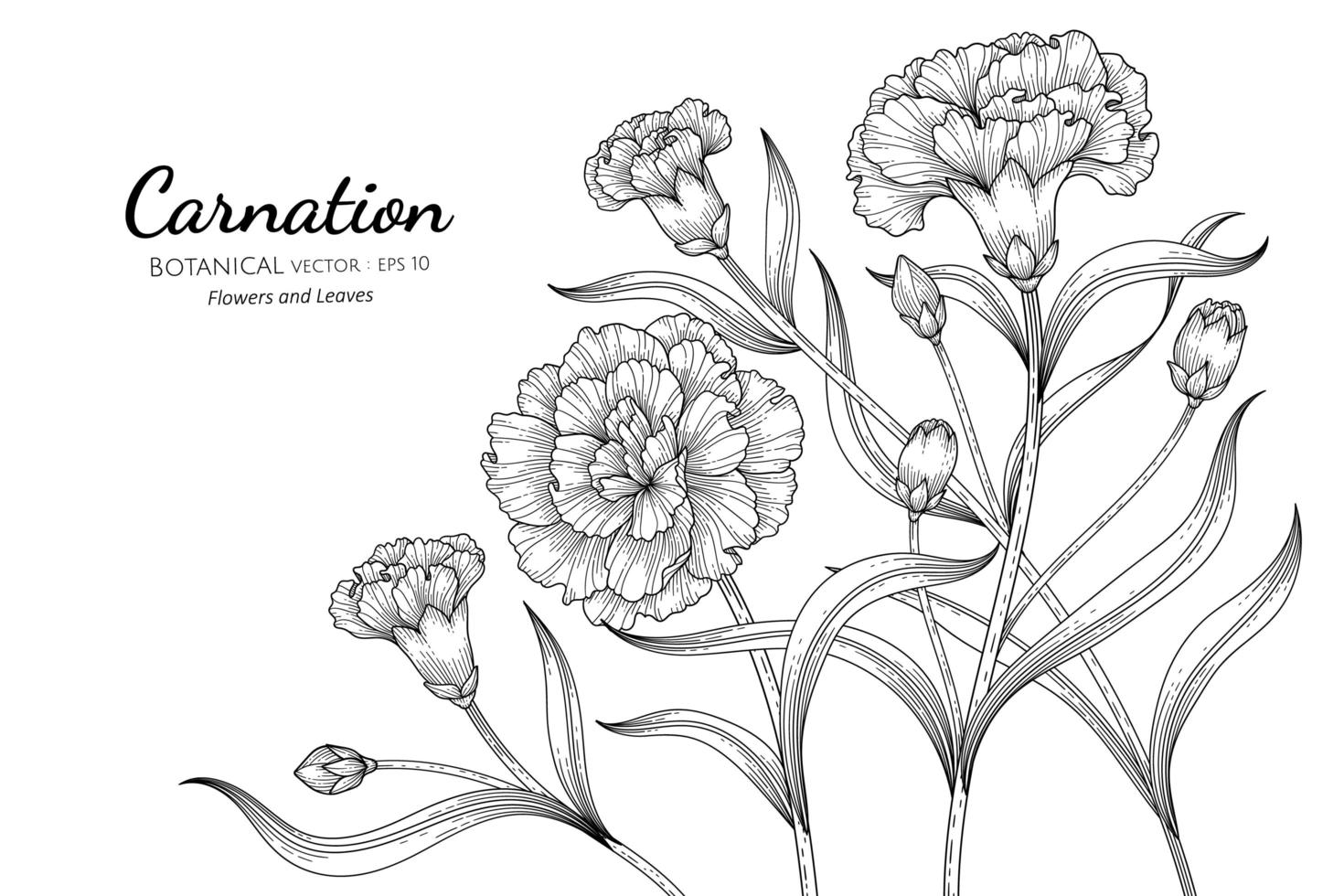 desenhos de mão desenhada de flores e folhas de cravo vetor