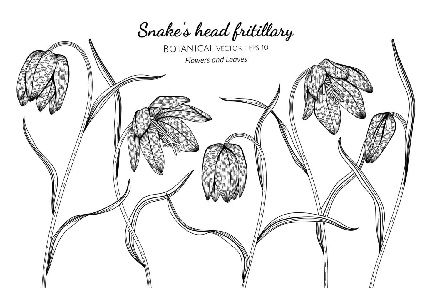 mão desenhada cabeça de cobra fritilar flores e folhas arte de linha vetor