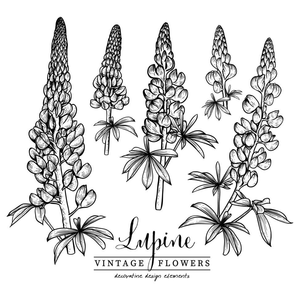 Elementos desenhados à mão de flores de tremoço vetor