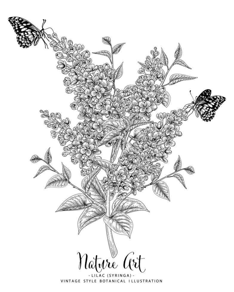 desenhos de flores lilás ou siringa. vetor