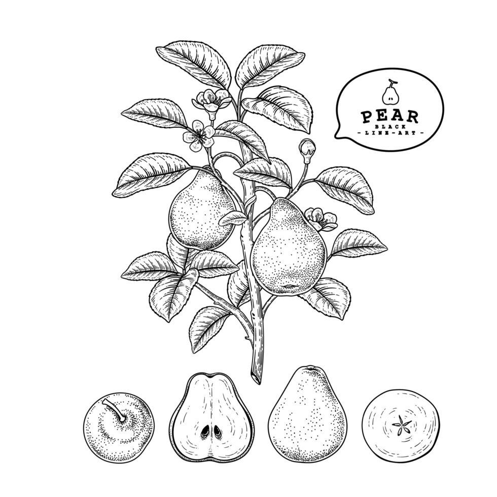 elementos de mão desenhada de fruta pêra. vetor