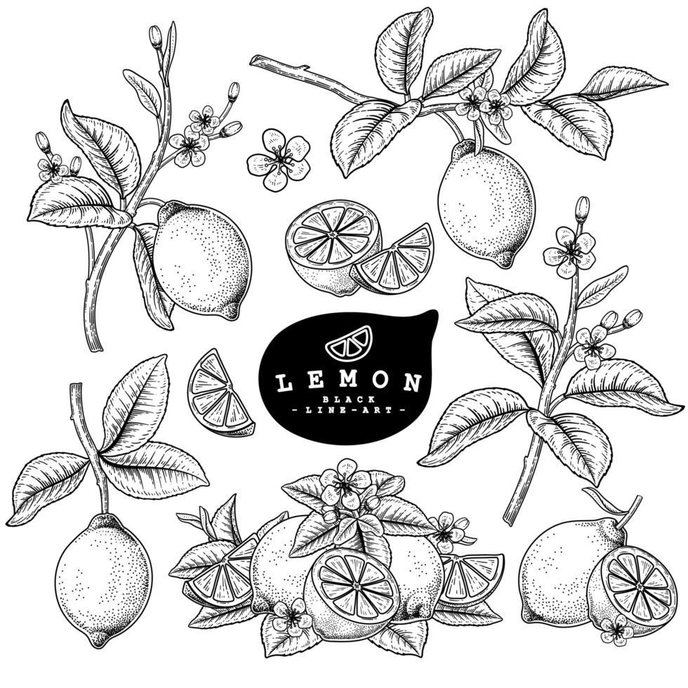 elementos de mão desenhada de citrinos de limão. vetor