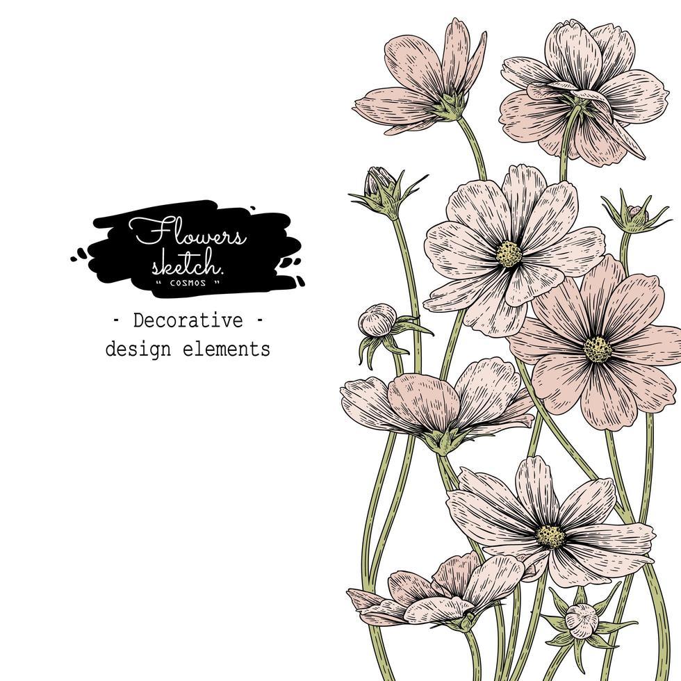 desenhos de flores do cosmos. vetor