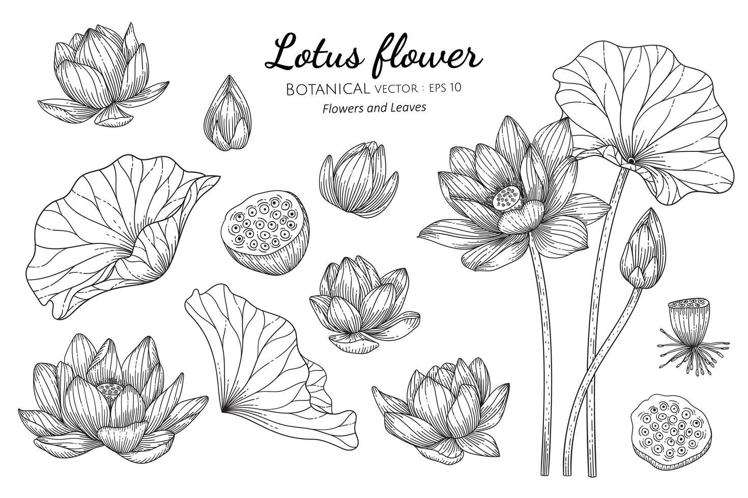 conjunto de flor de lótus e folha desenhada à mão ilustração botânica com arte de linha em fundos brancos vetor