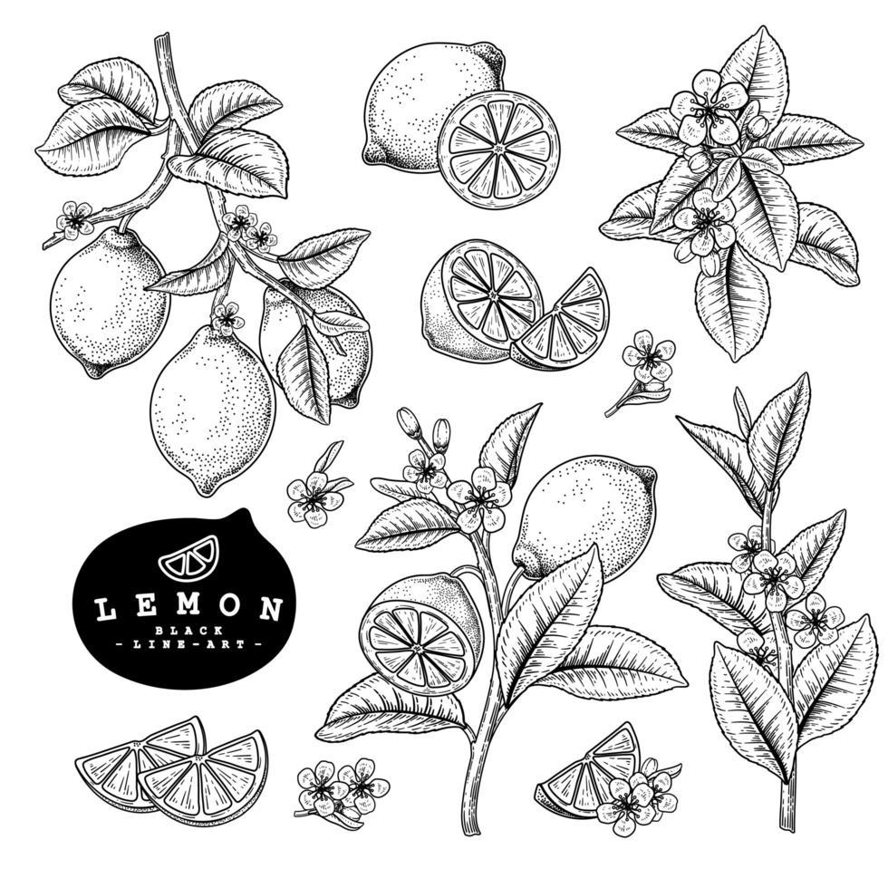 Elementos desenhados à mão de citrinos de limão vetor