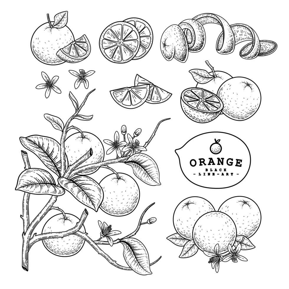 frutas laranja mão desenhada ilustração elementos. vetor