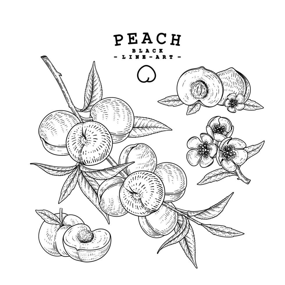 desenhos de frutas de pêssego. vetor