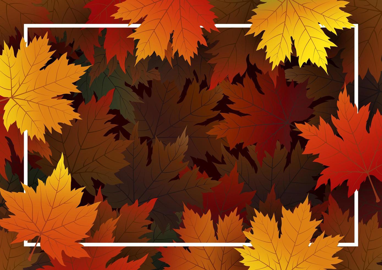 fundo de folhas de bordo de outono com moldura de linha vetor