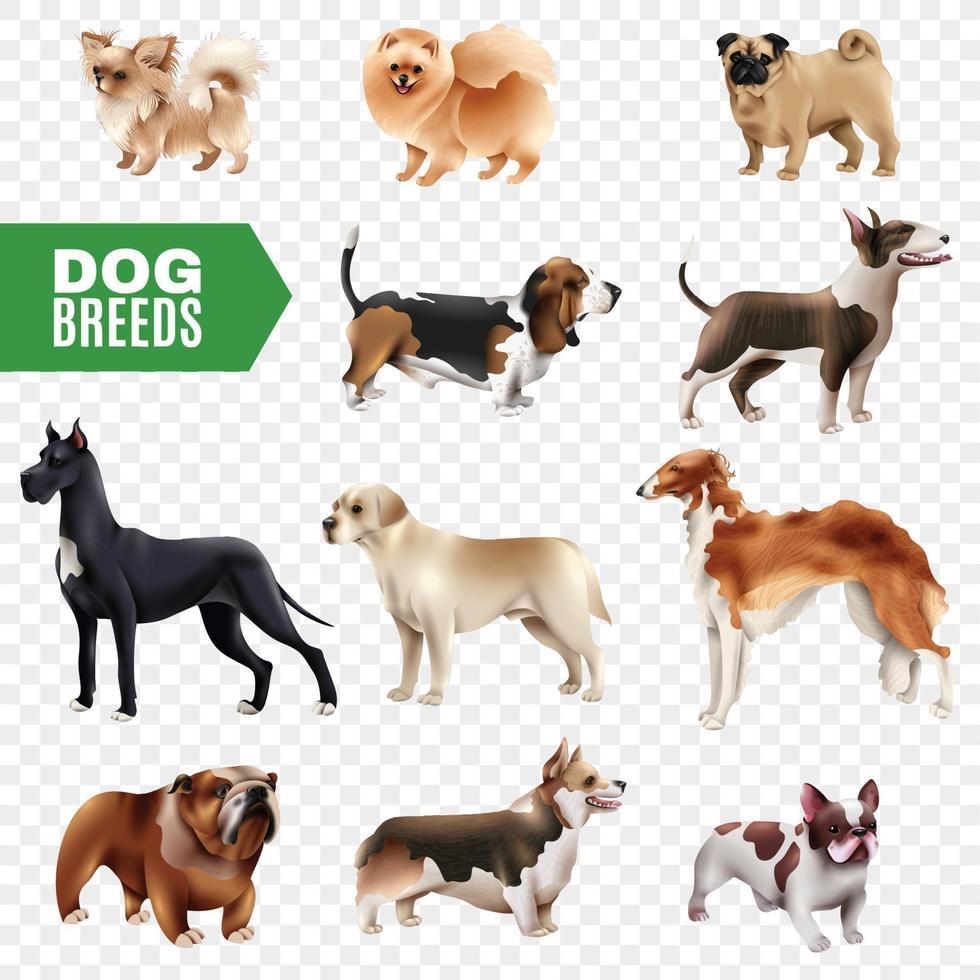 conjunto transparente de raças de cães vetor