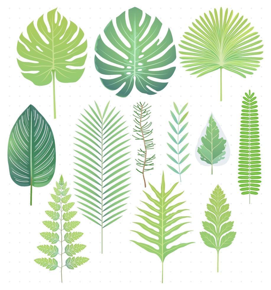 folhas tropicais verdes definir ilustrações vetoriais vetor