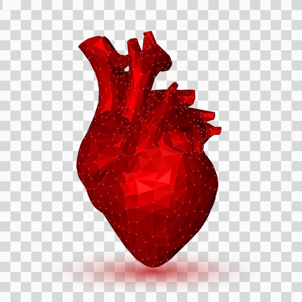 coração. Coração humano poligonal baixo 3D. órgão de anatomia abstrata. conceito de medicina. vetor