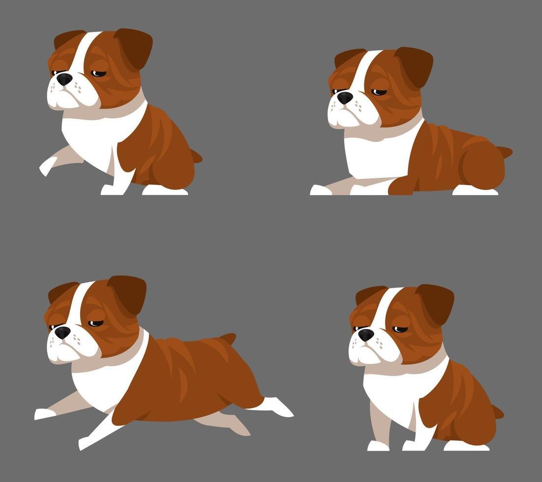 bulldog inglês em diferentes poses. vetor