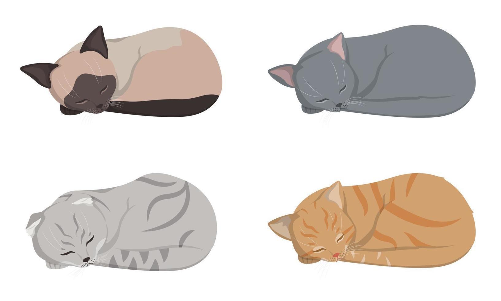 dormindo gatos diferentes. vetor