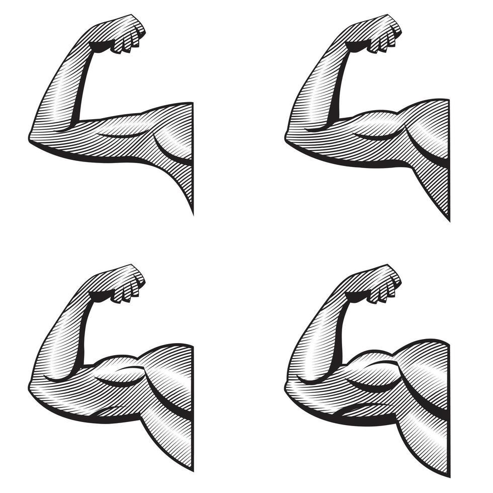braços diferentes com bíceps contraídos. ilustração dos músculos em estilo de gravura. vetor
