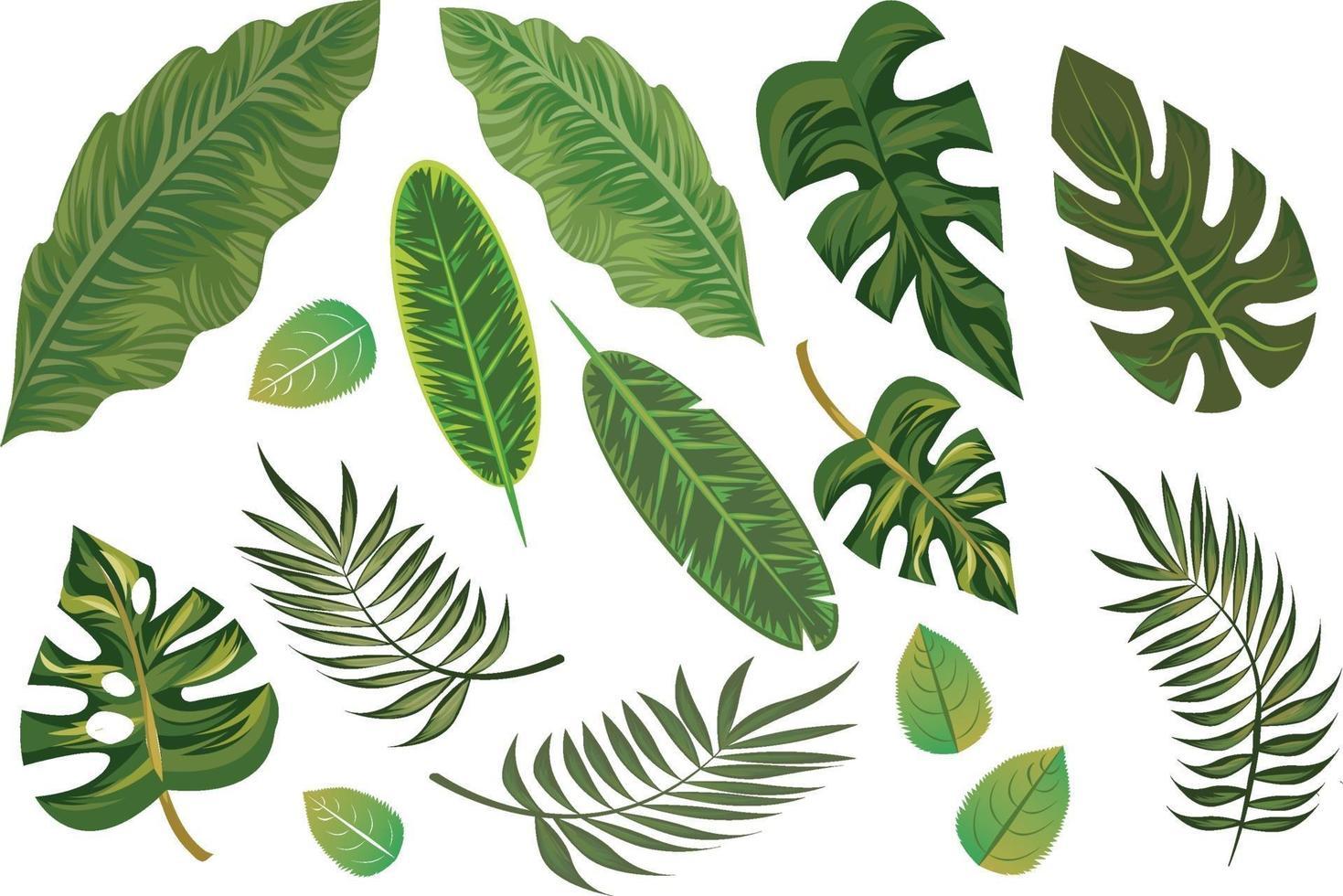 Elementos de folhas tropicais desenhados à mão isolados vetor