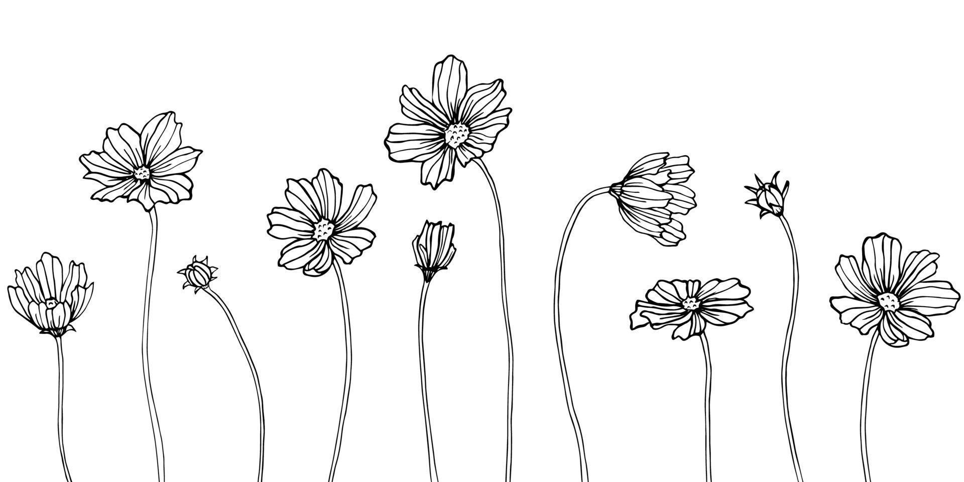 elemento de ilustração cosmea isolado. flores silvestres de primavera isoladas. arte em tinta preta e branca gravada. vetor