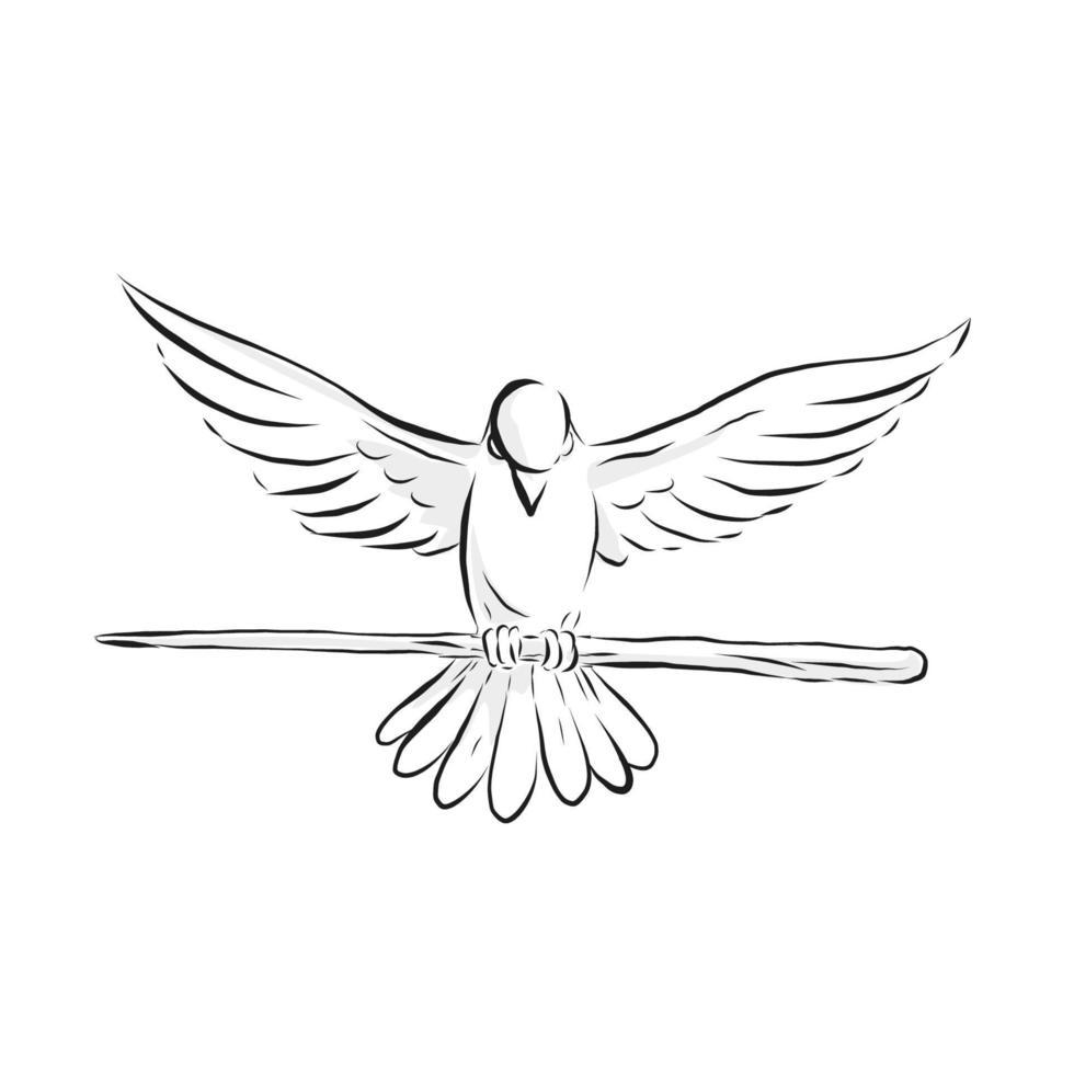 pomba voando alto segurando o desenho da frente do bastão vetor