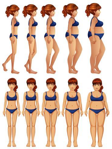 Frente e Lado da Transformação do Corpo da Mulher vetor