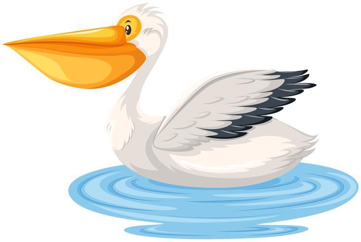 Um pelicano em fundo branco vetor