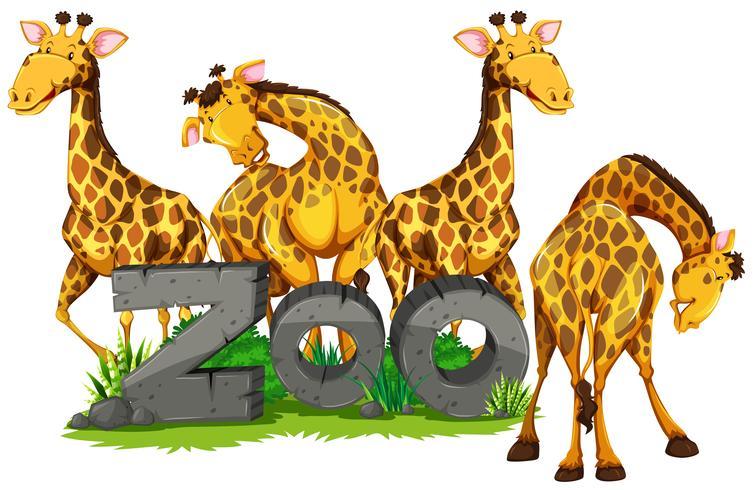Quatro girafas no zoológico vetor