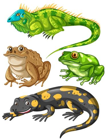 Tipo diferente de rãs e lagartos vetor