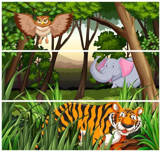 Vida selvagem na selva vetor