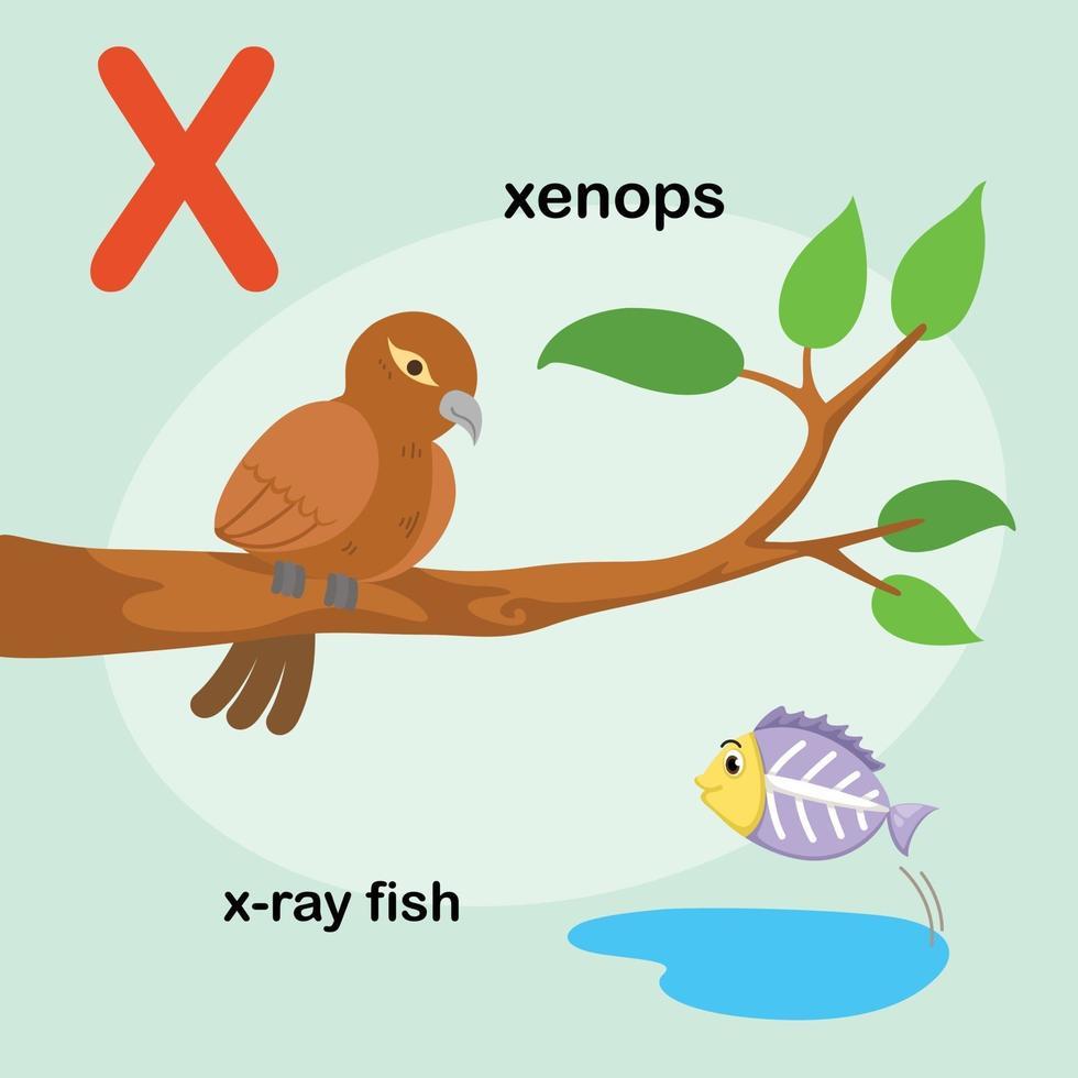 peixe de raio-x de letra do alfabeto animal, xenops.vector vetor