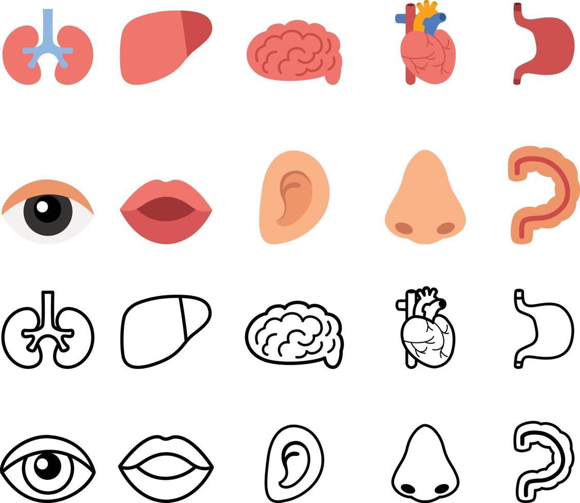 ilustração de órgãos humanos isolados vetor