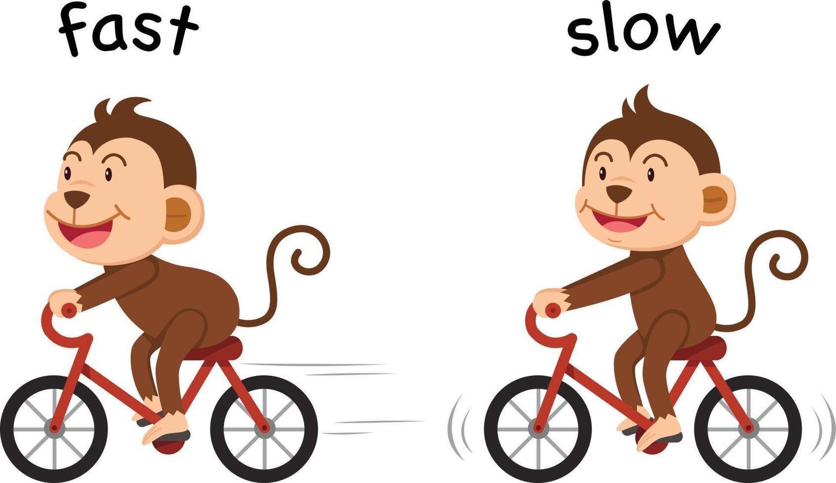palavras opostas vetor rápido e lento