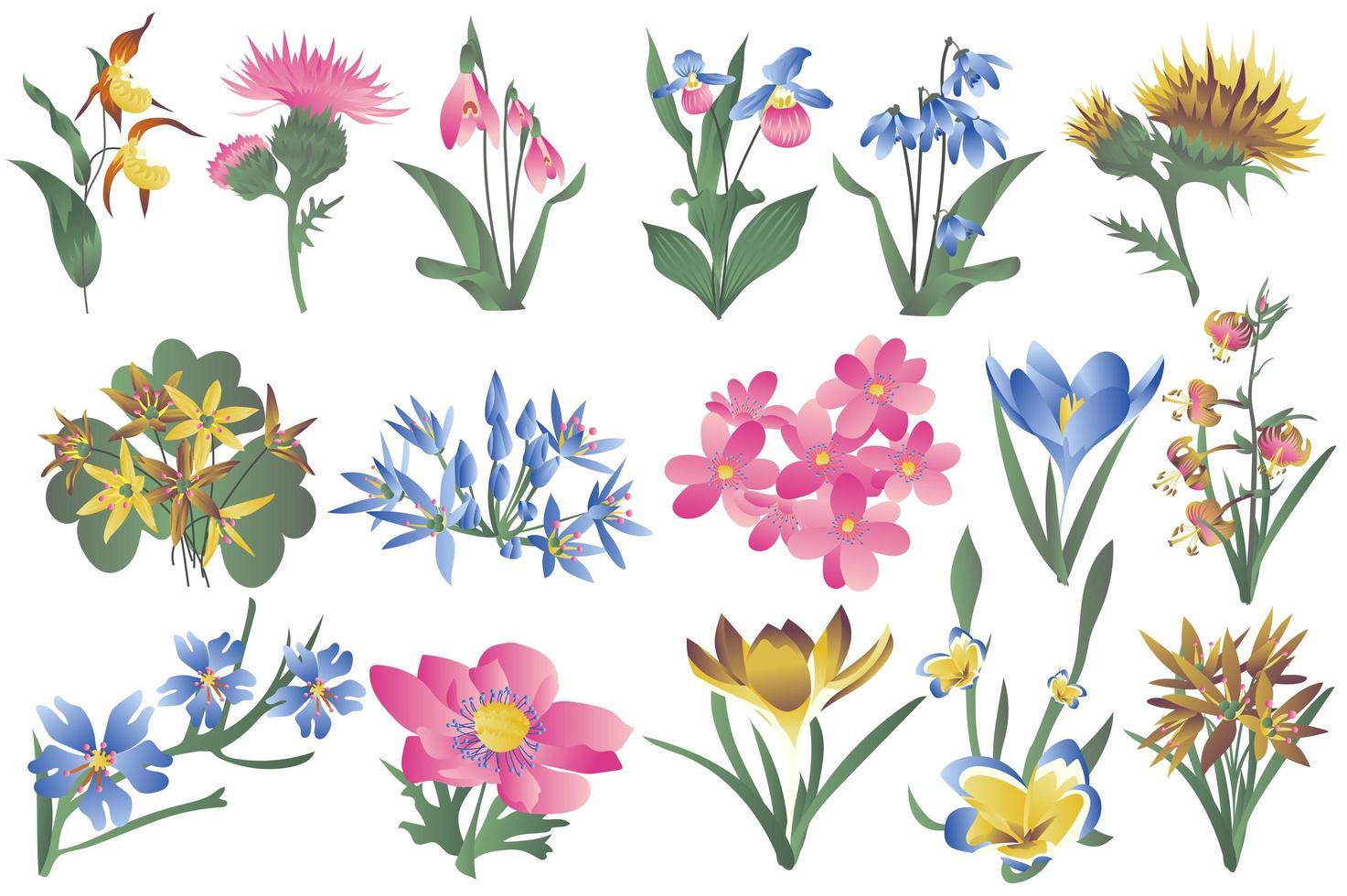 flores silvestres florescendo e um conjunto isolado de flores desabrochando vetor
