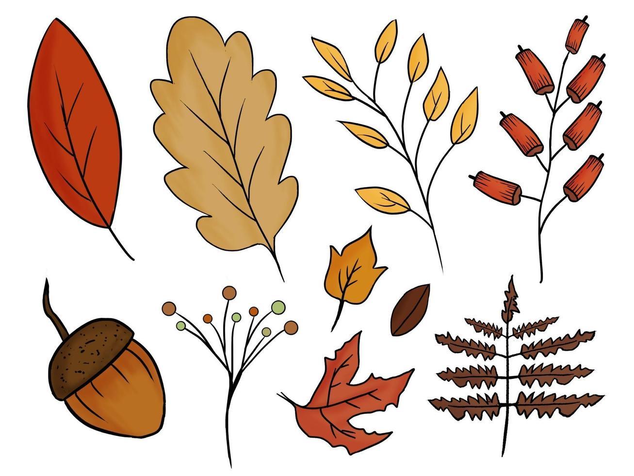 coleção colorida desenhada à mão de folhas de outono vetor
