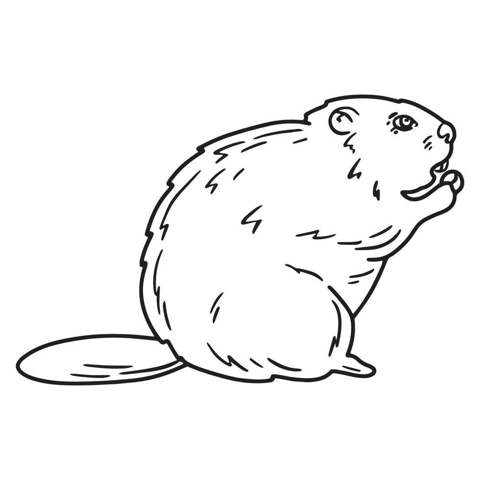 esboçar a ilustração de um castor com noz vetor