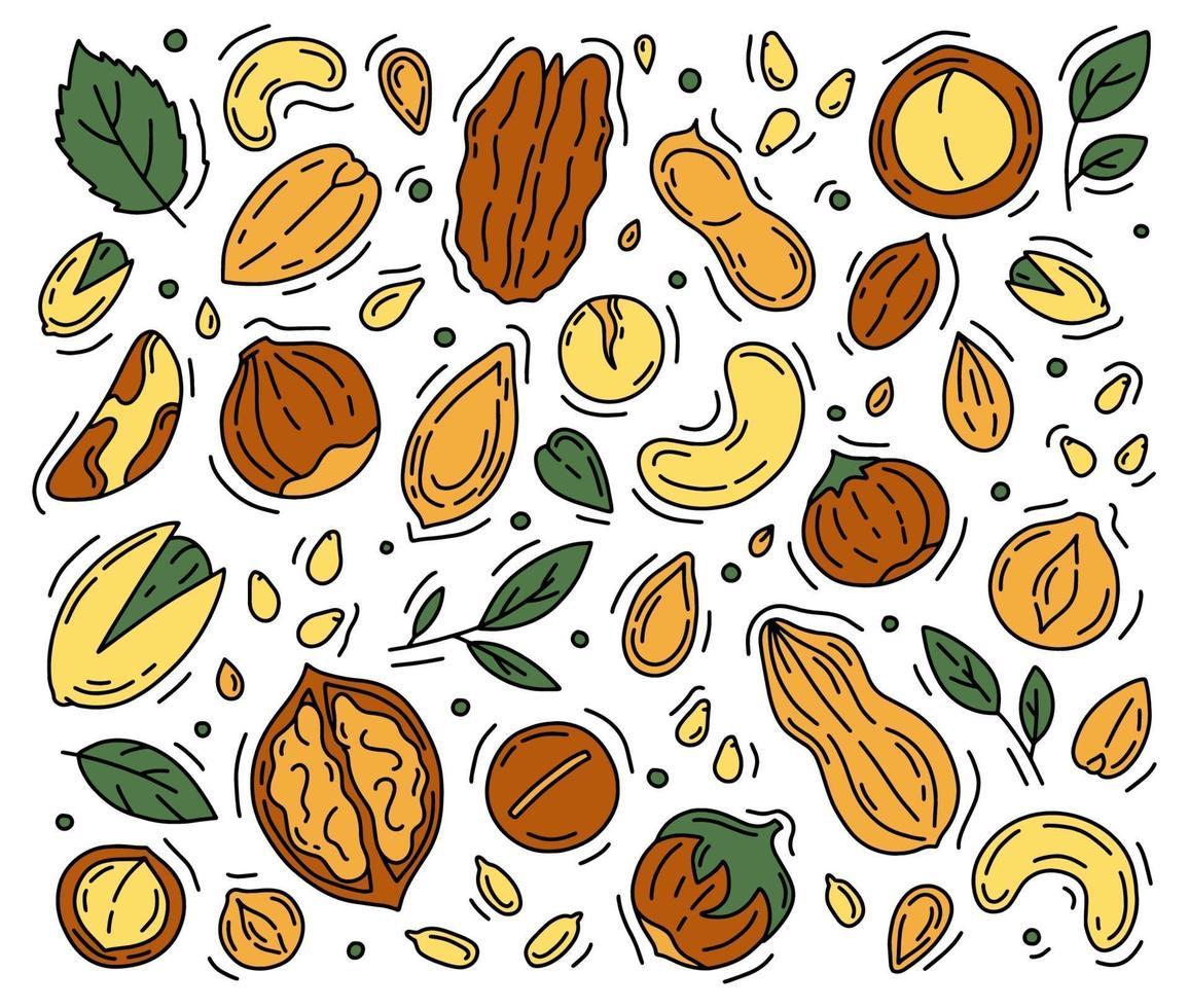 nozes e sementes um conjunto de ícones no estilo doodle. vetor