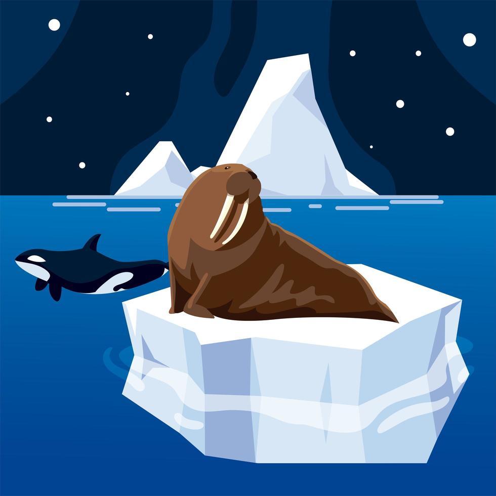 baleia orca e animais morsas pólo norte e céu noturno de iceberg derretido vetor