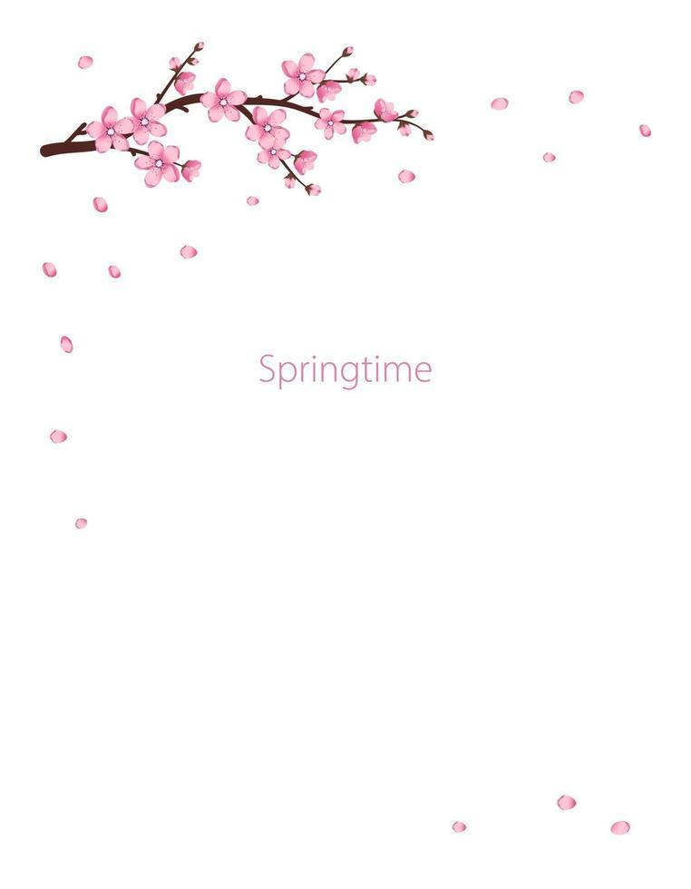 quadro de flores de sakura. os ramos de cerejeira floresceram vetor