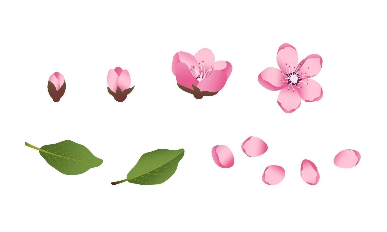 conjunto de ícones de flores de sakura fofas. a cereja floresceu vetor
