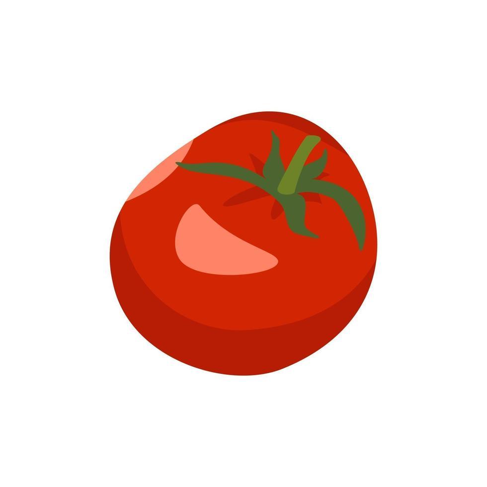 tomate inteiro, vegetal vermelho, colheita para fazer pasta de tomate ou salada vetor