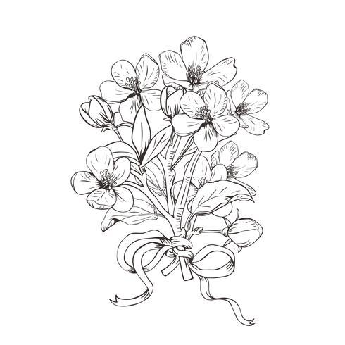 Árvore de florescência. Entregue o ramalhete botânico tirado dos ramos da flor no fundo branco. Ilustração vetorial vetor