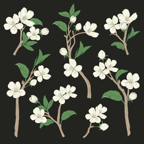 Árvore de florescência. Definir coleção. Entregue ramos brancos botânicos tirados da flor no fundo preto. Ilustração vetorial vetor